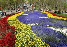 В Стамбуле открылся 13-й ежегодный Фестиваль тюльпанов