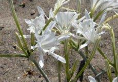 Сорвал цветок – заплати штраф $10 тыс