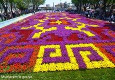 В Стамбуле презентовали огромный «ковер» из тюльпанов
