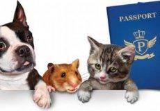 С 2021 года в Турции вводится обязательная регистрация домашних животных