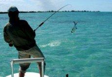 Какая рыбка водится в море возле Аланье?