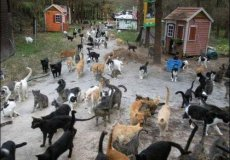 В Чанаккале откроют необычный приют – «Кошачью деревню»