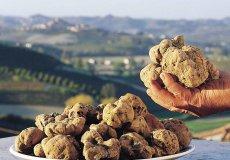 В Турции начали выращивать трюфель