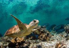 Турецкие пляжи – колыбель для черепах.