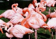 Птенцы фламинго на озерах Турции: уникальное зрелище, которое можно увидеть в июле