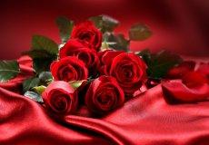 Турция – крупный поставщик цветов за границу