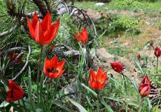 Не рвите дикие цветы в Турции, штраф - $10 000