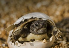 Четверых анталийцев оштрафуют из-за черепах