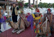В Анталье запретят покатушки на верблюдах