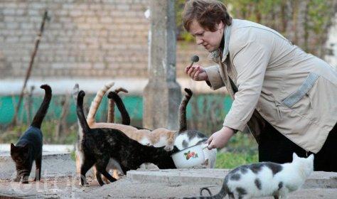 Добрые дела в условиях пандемии: животные не брошены